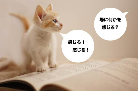 170911_bawakataru.jpg
